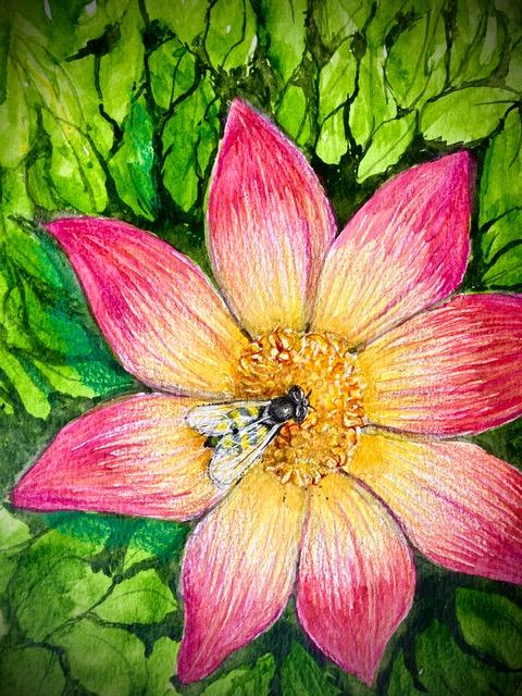Botanical Illustration-Edward Girard