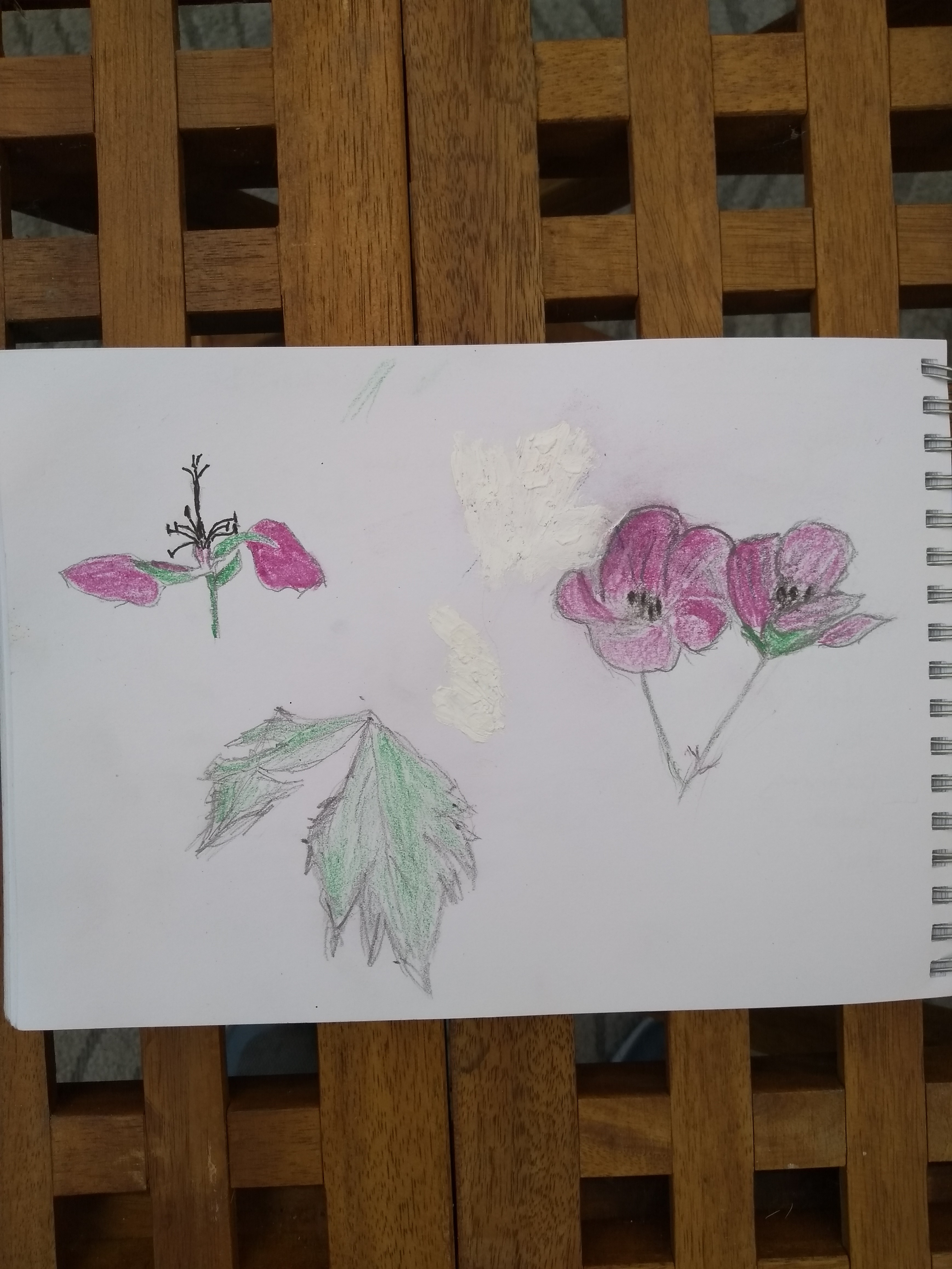 Botanical Illustration-Ron Burns